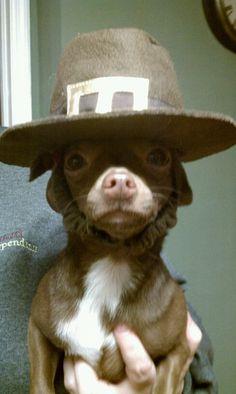 Chihuahua pilgrim- this made me laugh so hard