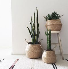 Loving this indoor plant arrangement! Recreate this clean look in your home too with our set of three Belly Baskets✖️ www.whiteandco.com.au