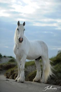 Beauty of the Day « Heart of a Horse