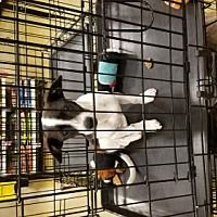 Pictures of Zorro a Chihuahua for adoption in Brooksville, FL who needs a loving home. Chihuahuas For Adoption, Pet Adoption, Small Dog Breeds, Small Breed, Brooksville Florida, Adoption Certificate, Adoption Party, Pet Memorial Gifts, Cat Party