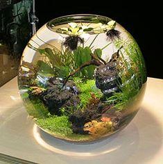 Aquaponics With Ducks And Fish Betta Fish Tank, Aquarium Fish Tank, Planted Aquarium, Live Aquarium, Beautiful Tropical Fish, Fish Tank Design, Indoor Water Garden, Shrimp Tank, Tropical Fish Tanks