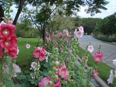 paisajes con flores - Buscar con Google