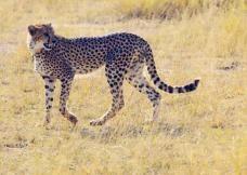 Page not found - Lekker Boutique Travel Kenya Travel, Travel Destinations, Animals, Animales, Animaux, Destinations, Animais, Animal