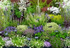 Herb Garden Layout Ideas Big Idea | Herb Gardening | Pinterest ...