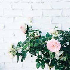 garden roses & white brick walls