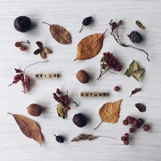 Autumn shows us how beautiful it is to let things go . Autumn Day, Autumn Leaves, Hello Autumn, Winter, Fall Tumblr, Autumn Aesthetic, Autumn Photography, Book Photography, Seasons Of The Year