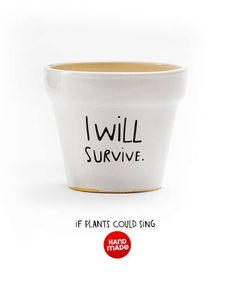 Slogan-Encouraging Planters - The 'I Will Survive' Plant Pot Keeps Your Plants Motivated (GALLERY)