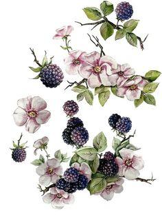 Botanical Tattoo, Botanical Drawings, Botanical Prints, Botanical Flowers, Illustration Botanique, Illustration Blume, Victorian Flowers, Vintage Flowers, Pintura Patina