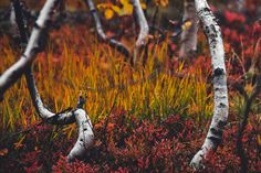 Use these five presets to give your autumn landscapes an atmospheric and warm look and really make the beautiful leaves stand out. Aerial Photography, Nature Photography, Raw Photo, Autumn Forest, Forest Landscape, Landscape Photos, Beautiful Landscapes, Lightroom Presets, Desktop