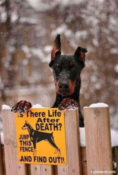 Life After Death...I need this for Bravo and Trooper, lol!