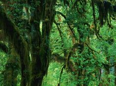 imagini din jungla - Căutare Google Trunks, Google, Plants, Drift Wood, Tree Trunks, Plant, Planets