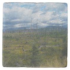 Polebridge Area Burnout Glacier National Park Stone Coaster