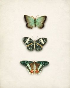 trio of butterflies in green and orange grace(ful things)
