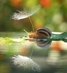 Photographs of a snail sitting on a leaf...