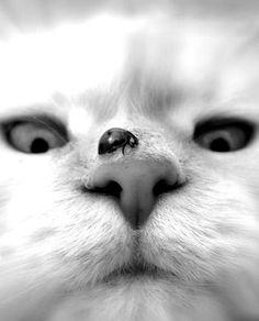 Cat coccinella