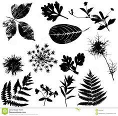 Flowers Leaves Vectors Black 1 Stock Image - Image: 3942961