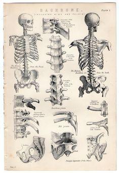 Best Human Anatomy Drawing Book New Old Books & Things — Michaelmoonsbookshop Late Human Anatomy Drawing, Anatomy Study, Body Anatomy, Anatomy Reference, Human Skeleton Anatomy, Human Spine, Human Body, Arte Com Grey's Anatomy, Anatomy Sketches