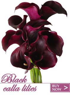 Black Calla Lilies... I love lilies of all kinds.. .and these are BEAUTIFUL.