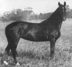 Ellen 1895 M