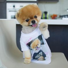8.2m Followers, 67 Following, 582 Posts - See Instagram photos and videos from jiffpom  (@jiffpom)
