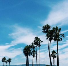#Summer #vintage #palms