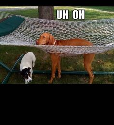 animals stuck in bad situations, dog stuck in hammock