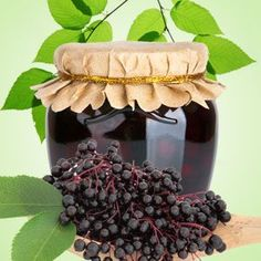 Wild Elderberry Fragrance Oil