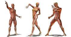 Resultado de imagen para referencias/anatomicas