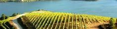 Las Jornadas de Puertas Abiertas de las Rutas del Vino de Galicia estarán centradas en la cultura y el vino https://www.vinetur.com/2014050715241/las-jornadas-de-puertas-abiertas-de-las-rutas-del-vino-de-galicia-estaran-centradas-en-la-cultura-y-el-vino.html