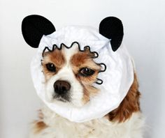 She has this Panda ear dog snood