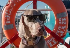 """¡Concurso para humanos perrunos! Si tu can es un """"perro de mar"""", puedes conseguir una travesía i/v en un camarote pet friendly de Baleària. Look At Me, Art Inspo, Wayfarer, Ray Bans, Style, Fashion, Pageants, Fantasy Art, Urban"""