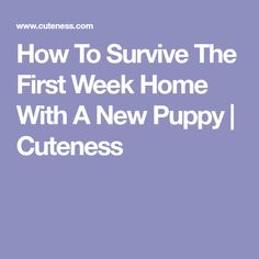How To Survive The First Week Home With A New Puppy | Cuteness