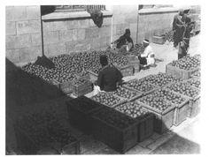 The Jaffa Orange: The Palestinian Gift to the World (6) | Before Their Diaspora