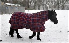 Now that winter is upon us, you might be shopping for a new winter blanket for your horse. Which one is best? Do you need a heavy blanket? Waterproofing? Which one fits a horse with high wither...