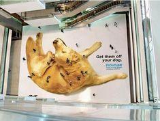 Such brilliant marketing ideas: Get them off your dog