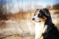 handsomedogs:    Mia / / G. Blanas