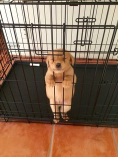 Poor puppy! Let him out!