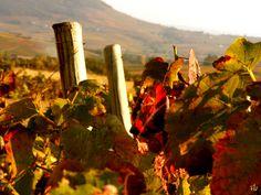 Couleurs d'automne sur le Mont Brouilly