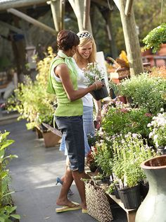 Where to Buy Plants:  Smart shopping will yield the best results for your garden.