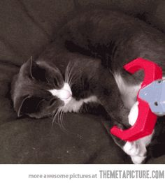 My cat has some serious issues…gif
