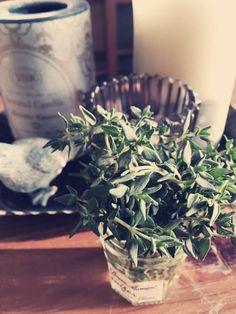 yasyunaさんが投稿した画像です。他のyasyunaさんの画像も見てませんか? おすすめの観葉植物や花の名前、ガーデニング雑貨が見つかる!GreenSnap(グリーンスナップ)