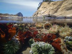 The One Beach In Oregon That You Absolutely Must Visit At Low Tide