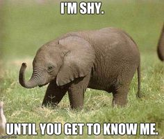 Baby elephant | I'M SHY. UNTIL YOU GET TO KNOW ME. | image tagged in baby…