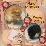 PEACH – A1082261, MARIO – A1082263