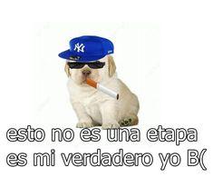 Spanish Memes, Humor Grafico, Best Memes, Funny Dogs, Mood, Lema, Wasp, Random, Frases
