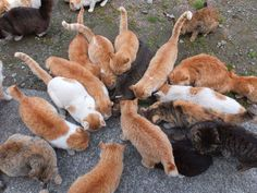 Demand Help For Japan's 'Cat Island' Cats