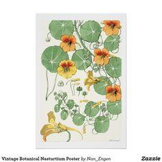 Vintage Botanical Nasturtium Poster