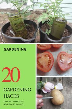 20 gardening hacks that will make your neighbours jealous