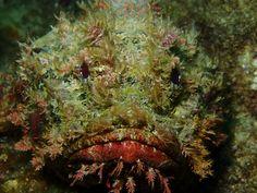 Grumpy Fish - by: Missy Witt
