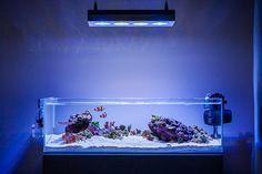 Saltwater Aquarium Setup, Aquarium Sump, Coral Reef Aquarium, Aquarium Design, Saltwater Tank, Marine Aquarium, Aquarium Fish, Glass Aquarium, Marine Fish Tanks